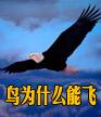 鸟为什么能飞